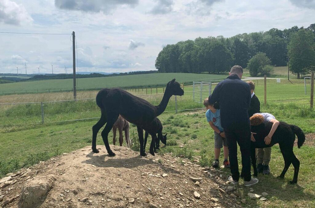 Alpakas helfen den Kindern